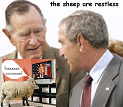 The sheep are restless