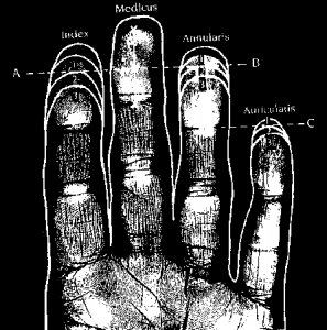 Finger length